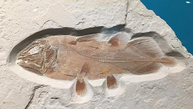 Milyonlarca yıllık balık fosili bulundu