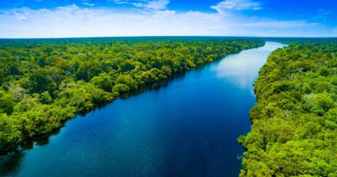 Amazon ormanlarının bir kısmı Facebook üzerinden satılıyor
