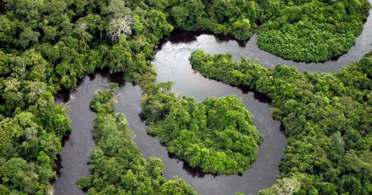 Amazon ormanlarının bir kısmı Facebook üzerinden satılıyor #1