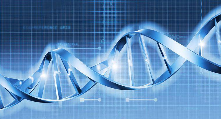 Kromozom ve Kromatid Arasındaki Farklar