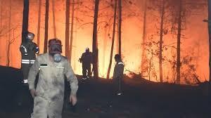 Orman Yangınları ve COVID-19